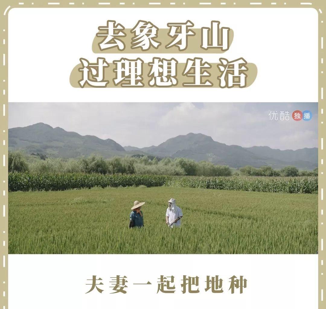 话题 | 乡村爱情,中国的乡土版迪士尼